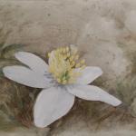 «Vårtegn II» /hvitveis, akryl og olje (40x50 cm)